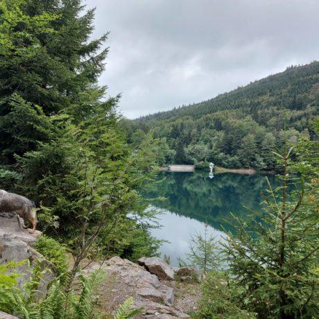 Magnifique circuit Départ vers 8h30 de Linthal pour le lac du Ballon et retour peu après 13 h