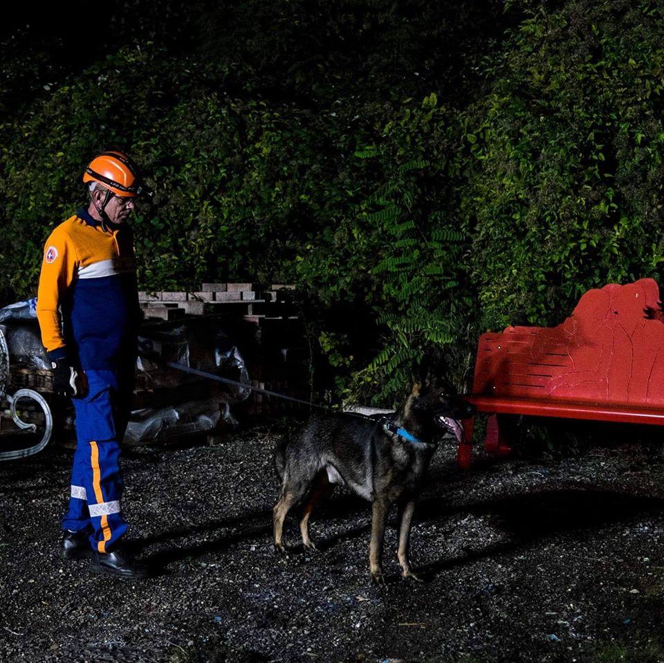 Berger Allemand de travail, sport de la cité des loups gris 68 Wittenheim Haut-Rhin (Alsace)
