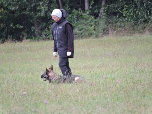 Les Berger Allemand de travail, sport de la cité des loups gris 68 Wittenheim Haut-Rhin (Alsace)