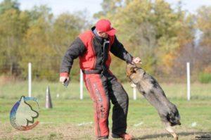Elevage berger allemand 68 Wittenheim : 2020 Une année tellement particulière et il faut savoir ou chercher le plaisir