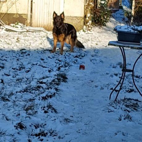 ma lywolf cherche les chats