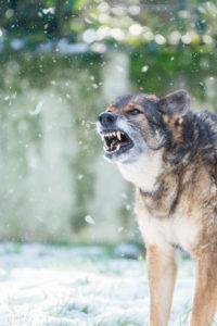 Une belle série de photos de Farah de la Cité des Loups Gris qui a 11 ans Merci et félicitations à son jeune maitre pour ce partage 😊
