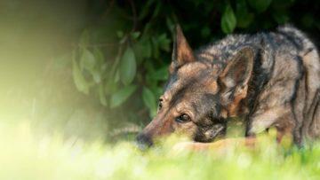 Photos de Farah de la Cité des Loups Gris